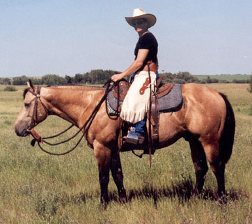 Paint Roping Horses For Sale